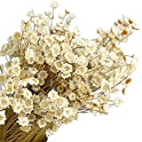 ChuW Dried Flower, 30pcs Natural Brazilian Little Star Flower Gypsophila Chrysanthemum Bouquet Art Deco Dried Flower Shooting Props DIY