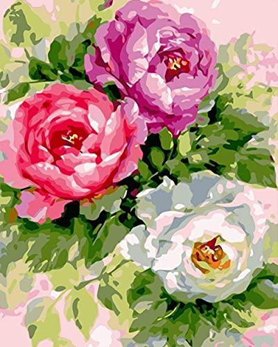 Xpboao Pintar por números - Flor de peonía - Pintura de Arte Moderno - Kit de Pintura de Bricolaje Adecuado para Adultos y Principiantes - 40x50cm - Sin Marco