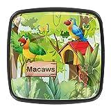 Bosque con guacamayos letrero de buzón con mango para cajón, para aparadores, armarios, mesita de noche, librería, (4 piezas)