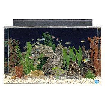 100 gallon acrylic tank - 1