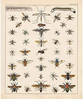 Vintage Poster Print Art Insects Identification Reference Collection Entomology Diagram Chart Bee Hexapod Wall Decor