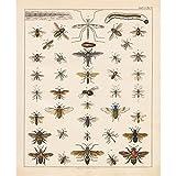 Meishe Art Poster Kunstdrucke Insekten Spezies Rassen