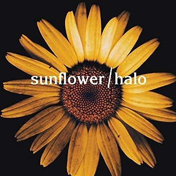 Sunflower / Halo (Mashup)