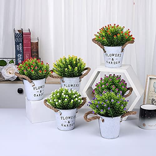 MAISITOO Plantas