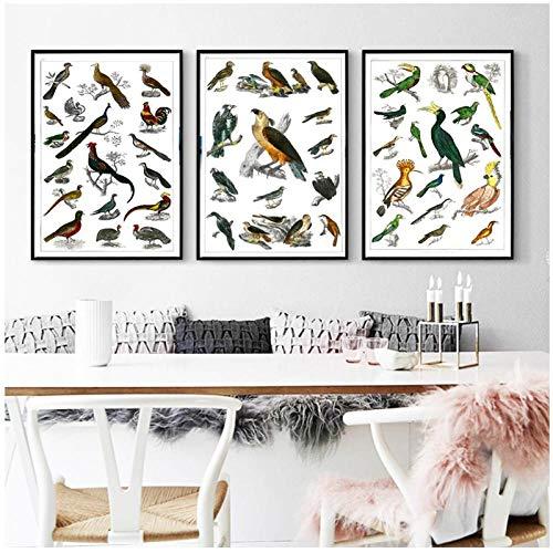 Zhaoyangeng Vintage Geanimeerde Natuur Encyclopedie Posters Vogels Soorten Klassieke Canvas Schilderijen Muur Kinderkamer Decor- 50X70Cmx3 Geen Frame