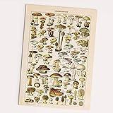 Follygraph Champignons Poster - Vintage, Pilze Bild, Wald,
