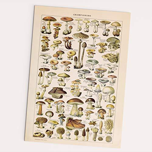 Follygraph Champignons Poster - Vintage, Pilze Bild, Wald, Pflanzen