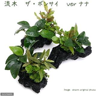 (水草)流木 ザ ボンサイ Ver.アヌビアスナナ Sサイズ(1本)(約15cm)