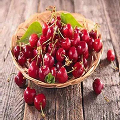 GETSO Kirsche Bonsai, Regenbogen süße Zwergkirsche Obstbaum Frühling Farm Home Bonsaipflanzen einfach Beste Verpackung 20 Stück wachsen: a