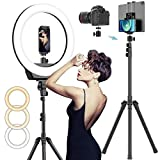 """AFI 16' Selfie Ring Light with 3 Color Modes 79"""" Extendable Tripod Stand Phone Camera Holder, 320 Bulbs 6500K 10 Brightness Dimmable LED Carrying Bag for Photography Makeup Live YouTube Video TikTok"""