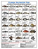 Tackle Box I.D. Florida Saltwater Fish Identification Card Set - Three Cards Showing 60 Common Fish, 17 Sharks
