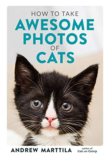 How to Take Awesome Photos of Cats - Andrew Marttila