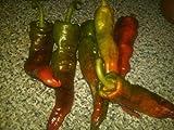 1 paquete de semillas Choricero pimienta Capsicum annuum