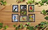 AG Crafts™ Collage Photo Frames (Set of 7, Wall Hanging),Black (Black)