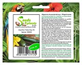 Pezzi - 4x Zucchina Patio Star F1- Zucchina Seme Verdure KS503 - Seeds Plants Shop Samenbank Pfullingen Patrik Ipsa