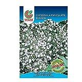 WAM Semillas de Gypsophila Paniculata Blanca, Sobre Clásico 2,5 gr