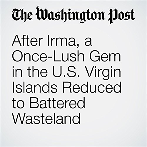 After Irma, a Once-Lush Gem in the U.S. Virgin Islands Reduced to Battered Wasteland copertina