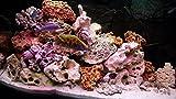 20kg mixte Lot de pierres pour Cichlidae du Malawi Tanganyika Aquarium Ocean Rock