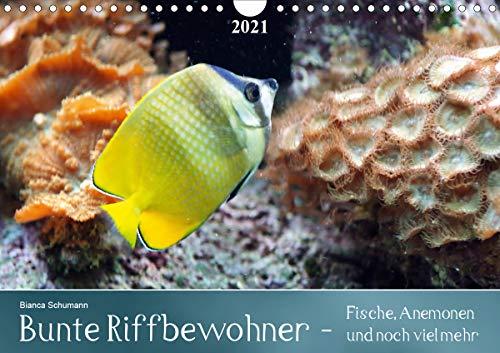 Bunte Riffbewohner - Fische, Anemonen und noch viel mehrCH-Version (Wandkalender 2021 DIN A4 quer)