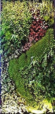 Foto di Sistema di parete verde, sistema modulare di giardino verticale per casa, ufficio, area commerciale, decorazione interna, piante non incluse