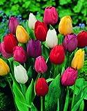 SVI Plants Seeds & Bulbs