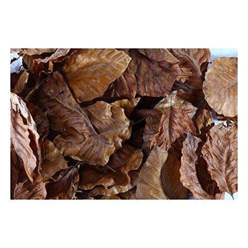 GTE Buchenlaub (braun), 40 Blätter Garnellen Futter