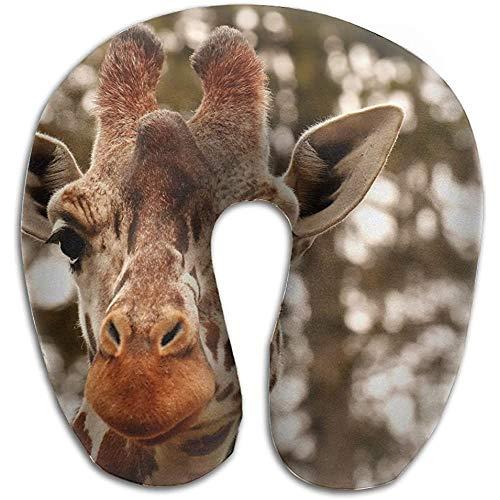 Jirafa Animal Retrato Fauna Silvestre Fotografía