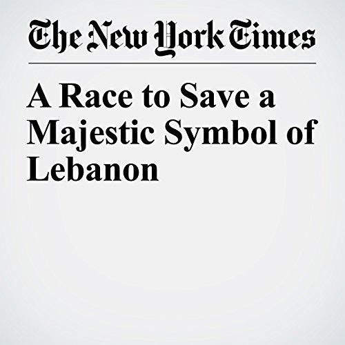 A Race to Save a Majestic Symbol of Lebanon copertina