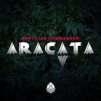 Aracata