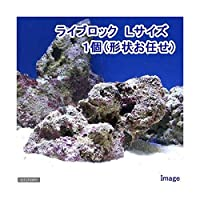 (海水魚)ライブロック Lサイズ(1個)(形状お任せ) 北海道航空便要保温 沖縄別途送料