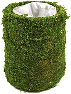Koyal Wholesale Cylinder Moss Vase (Pack of 6), 4 by 5