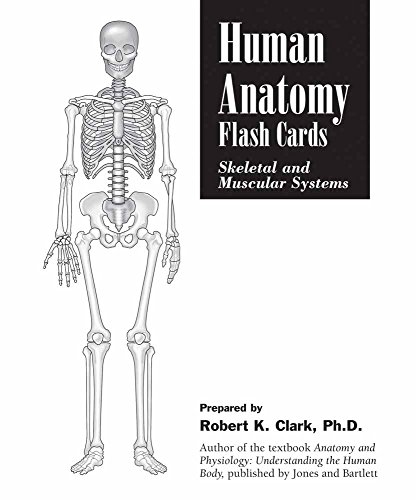 Human Anatomy Flash Cards: Skeletal And Muscular Systems