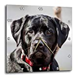 3dRose TDSwhite – Miscellaneous Photography - Black Lab Pet Dog Labrador Retriever Photo - 15x15 Wall Clock (DPP_322720_3)