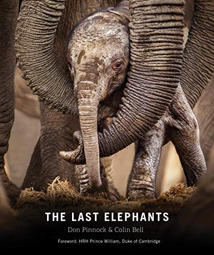 The Last Elephants