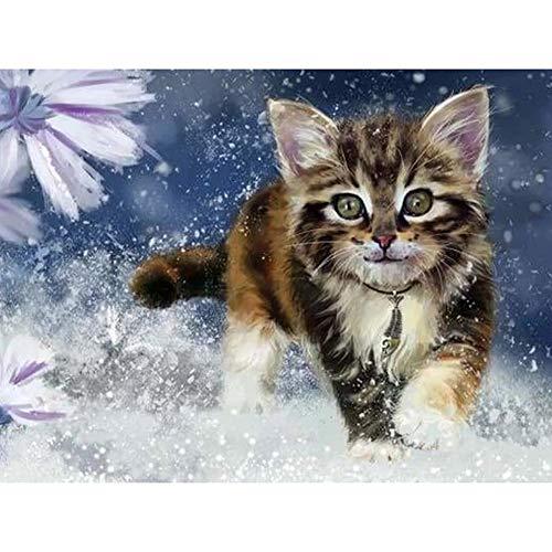 Diamant Schilderij 5D DIY Kits voor volwassenen, kinderen, beginners. Home Office Decortaion. Cadeaucadeautjes voor hem Haar Een Piercing Gaze Cat 15.7x11.8in 1 Pack van Jestang