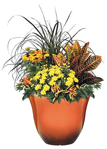 """container gardening Honeysuckle Planter, Patio Pot, 15"""" Tequila Sunrise"""
