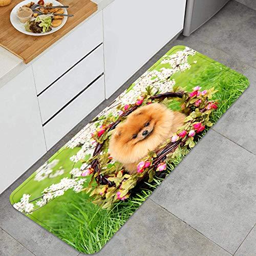 ZHIMI Alfombra de Cocina Antideslizante,Parque para Perros Pomerania Linda Hermosa Canasta,Estera de Cocina Felpudos Decorativo Alfombra para Dormitorio Baño Pasillo 45 x 120cm
