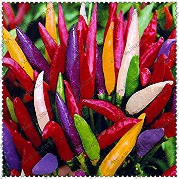 100pcs Graines Légumes Piment Jardin Potager Maison Multicolore Rare