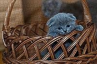 LHJOY 子供のジグソーパズル1000ピース子供スコティッシュフォールド猫灰色の籐バスケット動物誕生日プレゼントと子供女の子のためのホリデーギフト 75x50cm