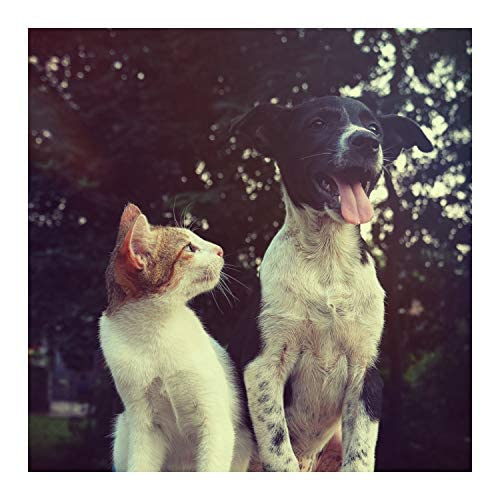 Música Relajante para Perros, Sleeping Music For Dogs & Music for Cats and Dogs