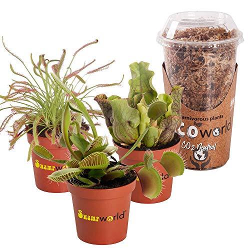 Swampworld Mini Fleischfressender Pflanzen-Mix P6-3 Stück + Moos