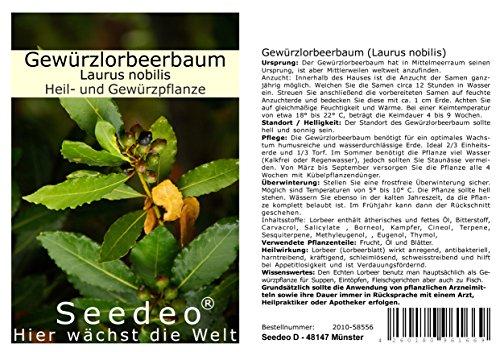 Seedeo Gewürzlorbeerbaum (Laurus nobilis) 6 Samen
