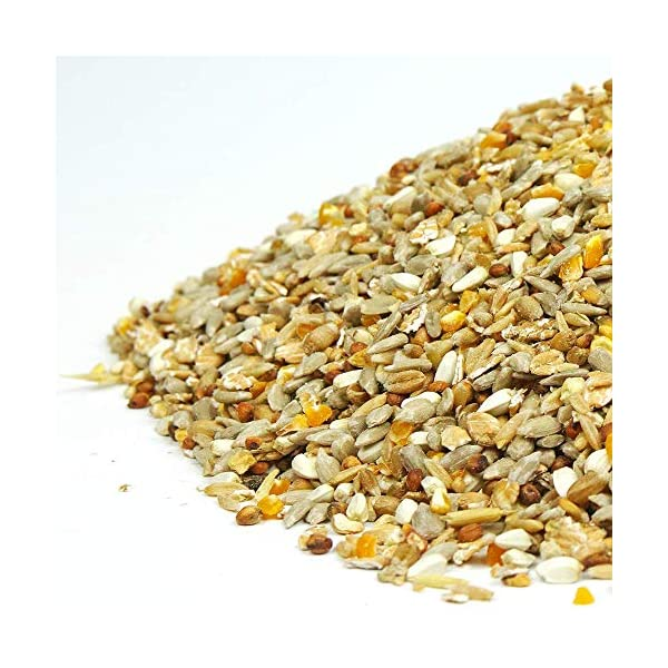 SQUAWK No Mess Seed Mix | Garden Wild Bird Food Mixture | Husk and Shell Free Seeds | Premium Quality Balanced Formula | Protein-Rich Mix Great Source of Energy | Attracts Various Birds