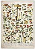 Vintage verduras frutas setas lienzo póster impresiones arte de pared antiguo cartel de ciencia botánica cocina arte de pared decoración del hogar 40x60 cm