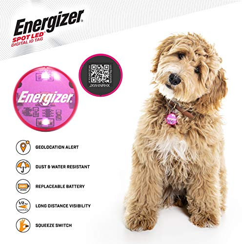 SPOT LED Energizer Digital Pet QR Recovery ID Tag, IP65 Water and Dust Resistant with Half Mile Visibility, Pink (94550)