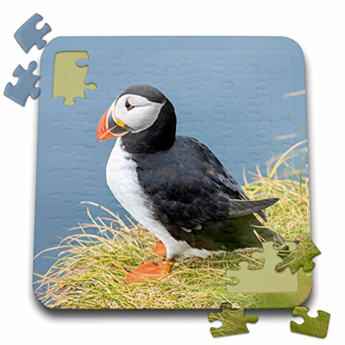 3dRose Atlantic Puffin Look Over a Cliff on Mykines, Faroe Islands. Denmark - Puzzle, 10 by 10-inch (pzl_277351_2)