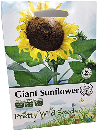 100 Pictorial Yellow Giant Sunflower Seed Packet Contains 100 Seeds