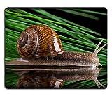 luxlady Gaming Mousepad imagen ID: 34320278Helix Aspersa–Caracol de jardín