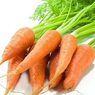 1Bag = 100 piezas calientes de la venta de semillas Gigante r¨¢bano de la zanahoria Japon?S NO-OGM semillas de hortalizas deliciosa Bonsai casa y el Jard¨ªn