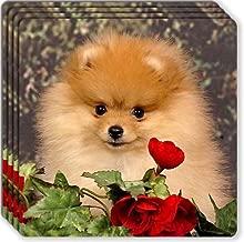 Canine Designs Pomeranian Rubber Coasters Set of 4